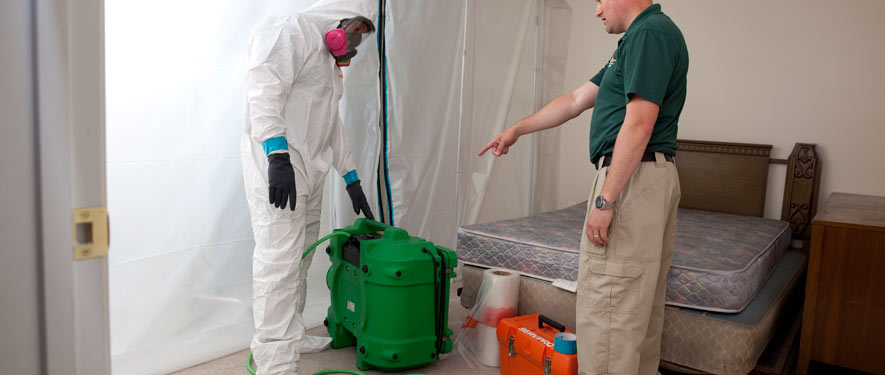 New Haven, CT mold removal process